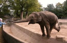 slon_koji_jede_nasovna