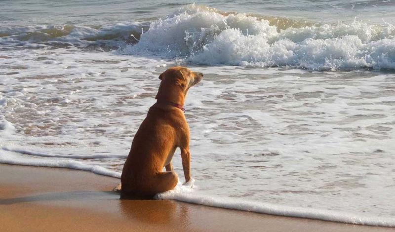 Foto: beachmeter.com