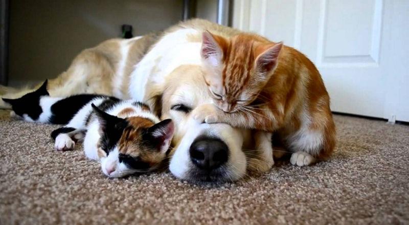 Foto: dogcat.love