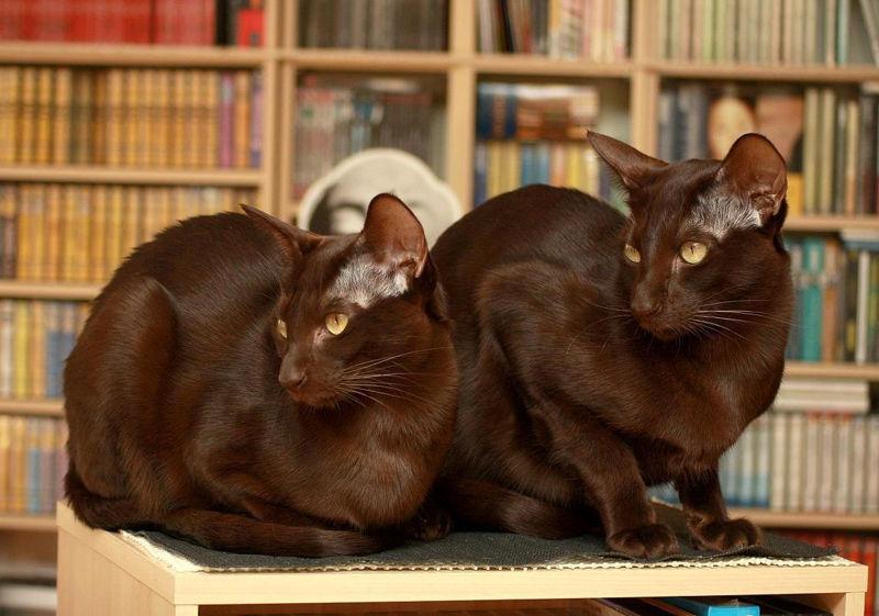 Foto: mascotarios.org