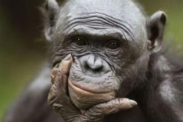 majmun_koji_misli_naslovna