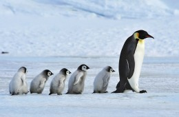 pingvini_naslovna