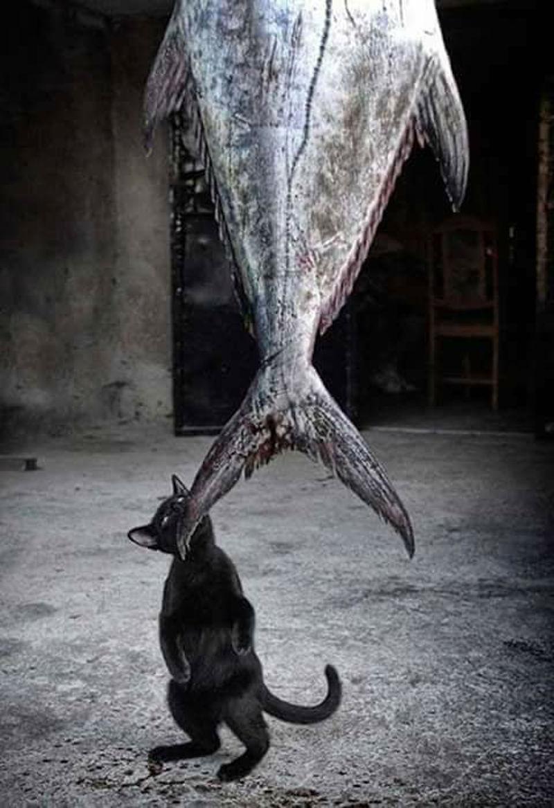 Foto: catster.com
