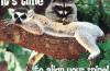 rakuni_i_lemuri_naslovna
