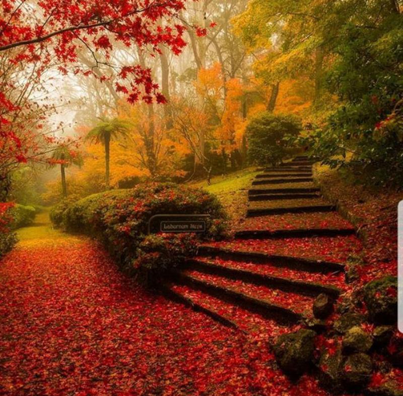 Foto: getwallpapers.com