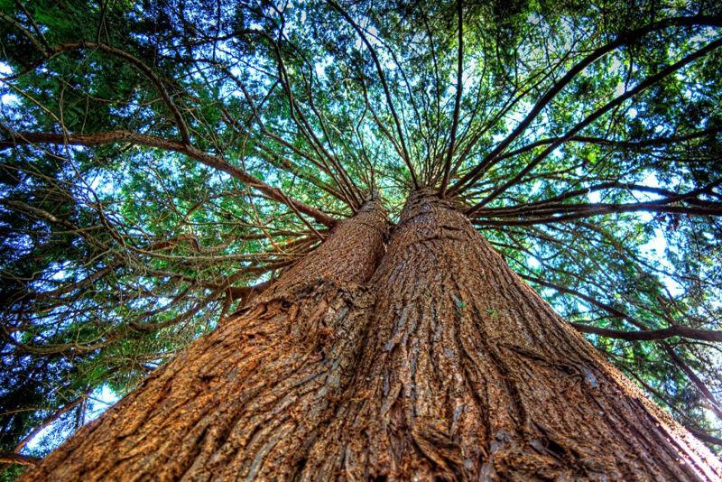 Foto: tentree.com