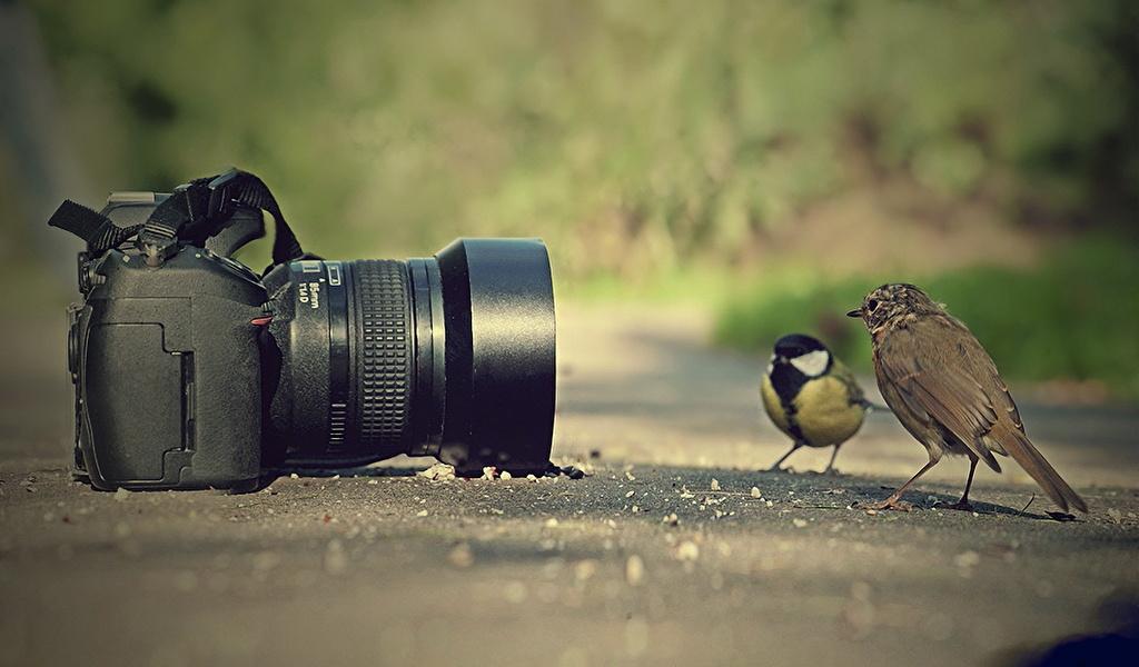 Foto: 1zoom.me