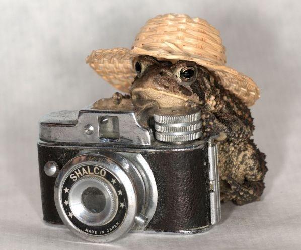 Foto: petsfoto.com