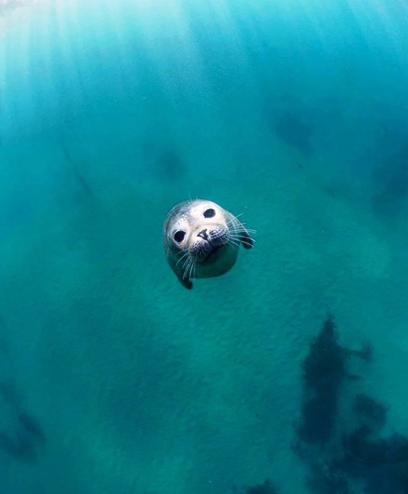 Podvodne_slike_1