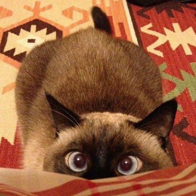 Foto: purrtacular.com