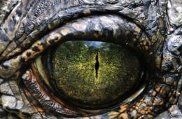 dinosaurusi_nestanak_naslovna