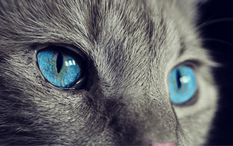 Foto: iheartcats.com