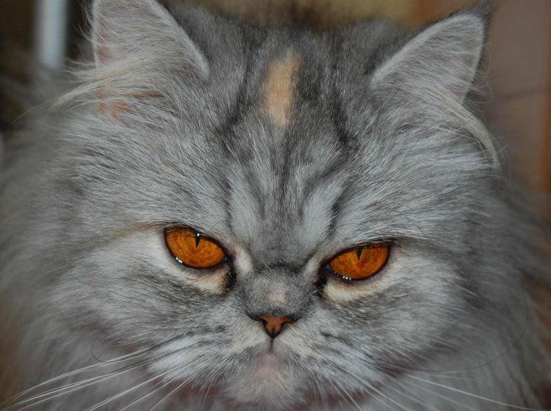 Foto: pets-wiki.com