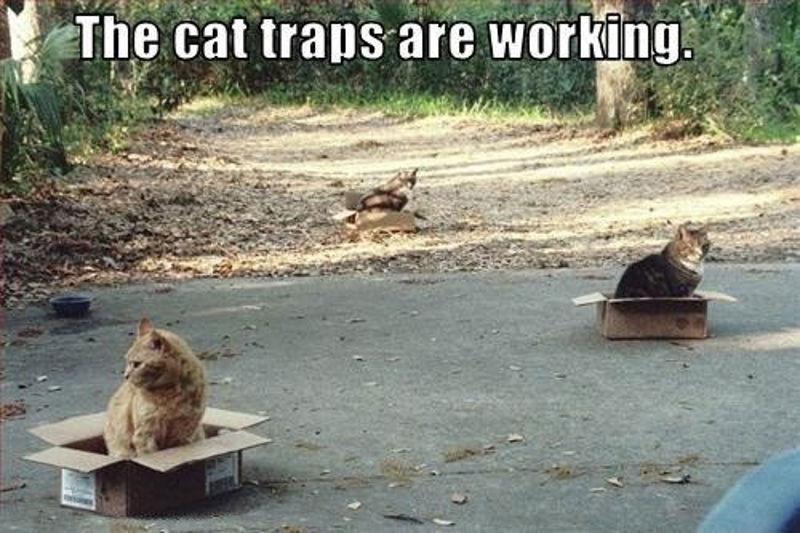 Foto: thisbugslife.com