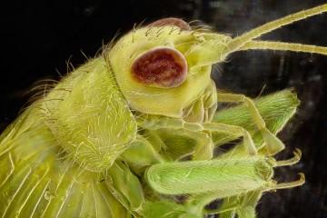 insekti_naslovna