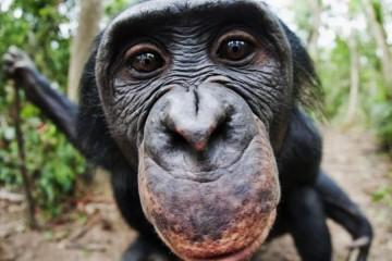 majmuni_naslovna