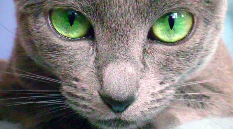 Foto: cats.ava7.com
