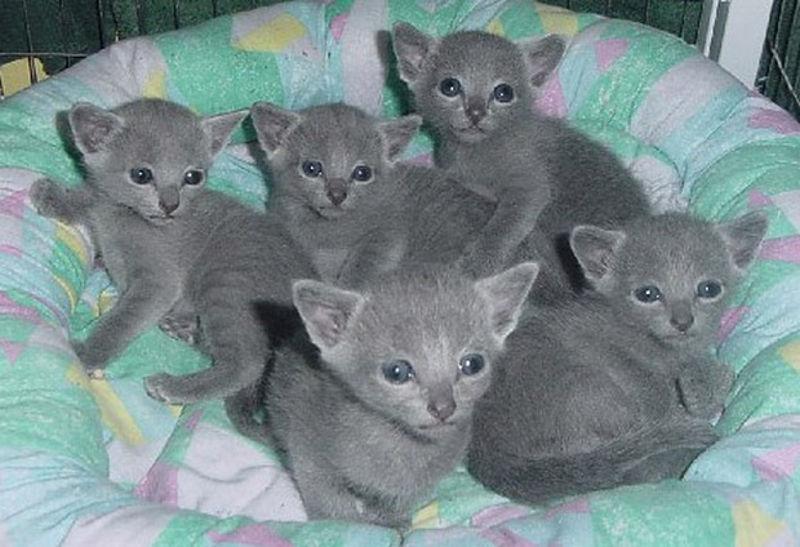 Foto: kittentoob.com