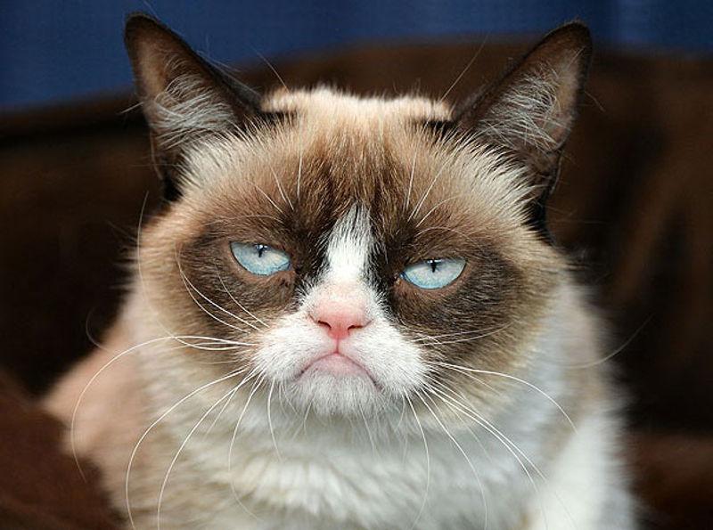 grumpy_maca
