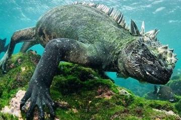 morska_iguana_naslovna