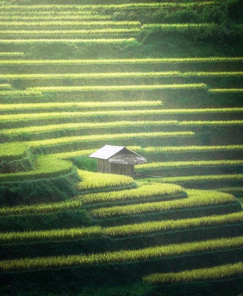 polja_pirinca_7