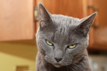 mačka_djavo