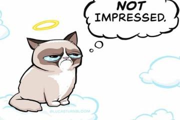 grumpy_cat_naslovna