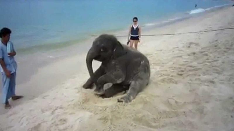 mali_slonovi_11