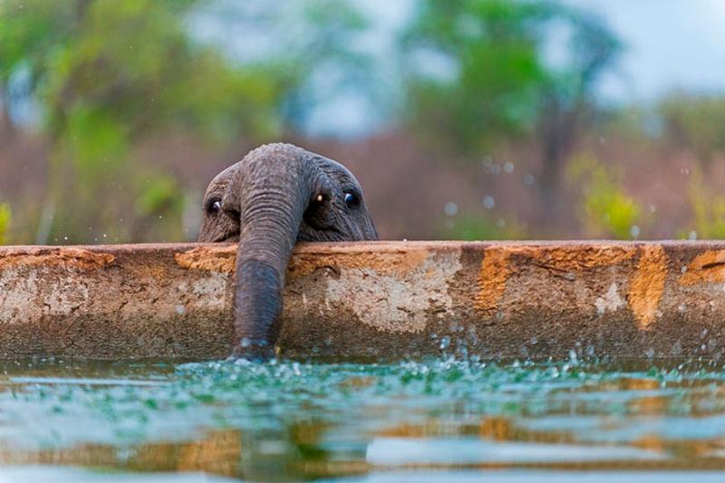 mali_slonovi_12