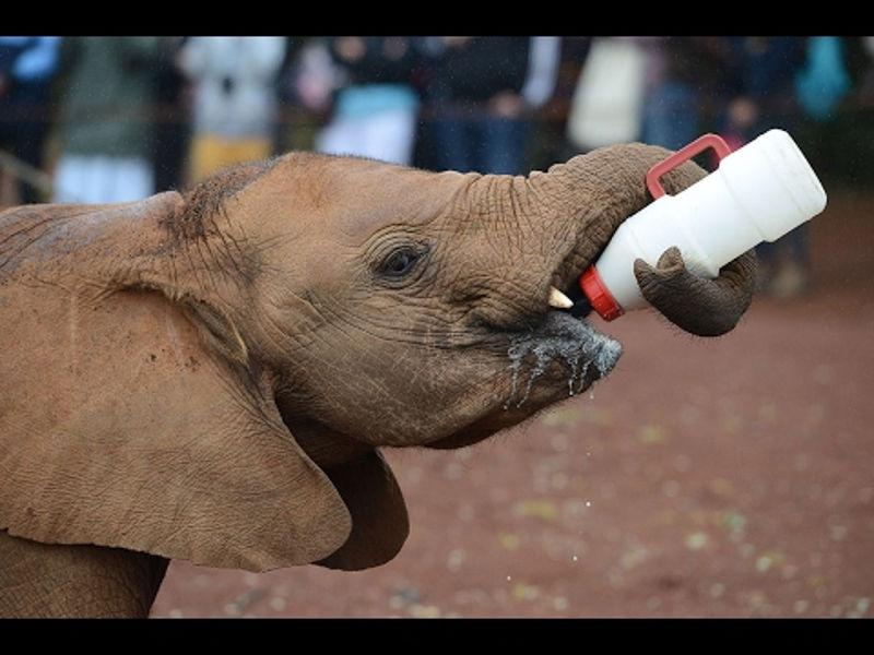 mali_slonovi_6