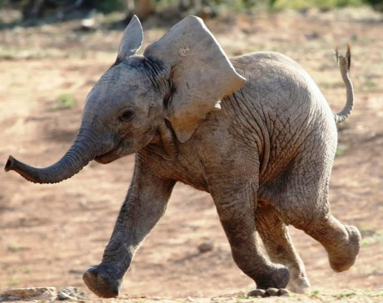 mali_slonovi_naslovna