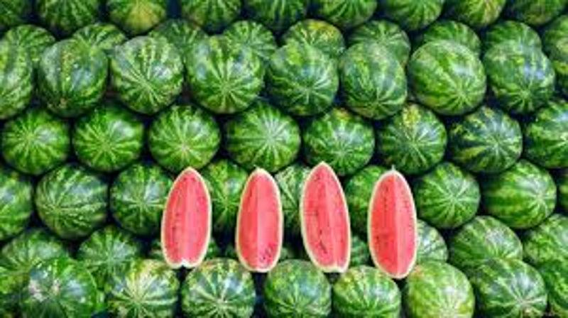 lubenice_3