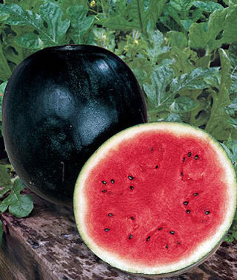 lubenice_5