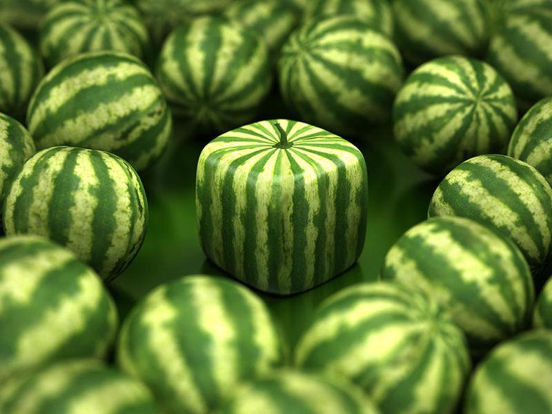 lubenice_6