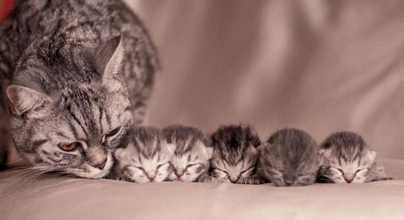Foto: welovecatsandkittens.com