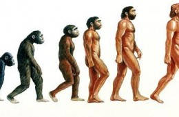 """Human evolution.  Illustration showing stages in the evolution of humans. At left, proconsul (23-15 million years ago) is depicted hypothetically as an African ape with both primitive and advanced features. From it Australopithecus afarensis (>4- 2.5 Myr BP) evolved and displayed a bipedal, upright gait walking on two legs. Homo habilis (2.5 Myr BP) was truly human (""""homo"""") resembling Australopithecus but also used stone tools. About 1.5 Myr BP Homo erectus (at centre) appeared in Africa, used fire, wooden tools, and migrated from Africa into Eurasia. Homo neanderthalensis (200,000 years BP) lived in Europe and Middle East and was closely related to modern humans (right)."""