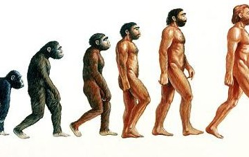 "Human evolution.  Illustration showing stages in the evolution of humans. At left, proconsul (23-15 million years ago) is depicted hypothetically as an African ape with both primitive and advanced features. From it Australopithecus afarensis (>4- 2.5 Myr BP) evolved and displayed a bipedal, upright gait walking on two legs. Homo habilis (2.5 Myr BP) was truly human (""homo"") resembling Australopithecus but also used stone tools. About 1.5 Myr BP Homo erectus (at centre) appeared in Africa, used fire, wooden tools, and migrated from Africa into Eurasia. Homo neanderthalensis (200,000 years BP) lived in Europe and Middle East and was closely related to modern humans (right)."