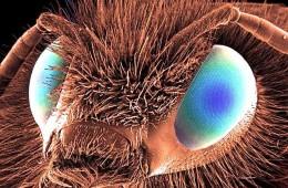 pcela_naslovna_mikroskop