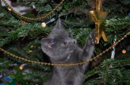 mačka_jelka