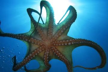 hobotnica_naslovna