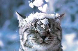 mačka na snegu